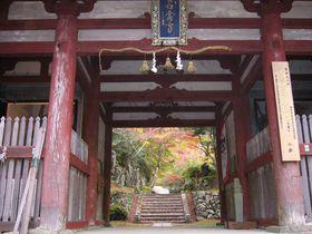 息をのむほど美しい、紅葉の中へ、丹波もみじめぐりの一日旅|兵庫県|トラベルjp<たびねす>