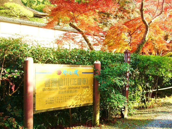 「錦の里」正暦寺のある聖地菩提山は釈迦修行の聖地