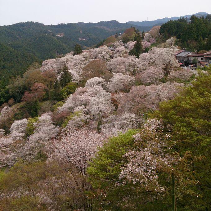 修験道の総本山「金剛峯寺 蔵王堂」を訪ね、一目千本の眺望を味わう「下千本」