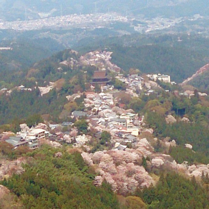 歌舞伎十八番『義経千本桜』の舞台「上千本」