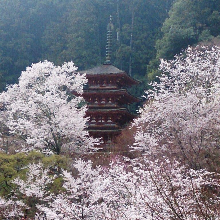 旅の始まりは、湯気によもぎが香る参道から、桜色の境内へ「豊山 長谷寺」