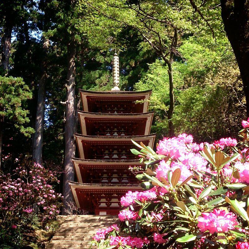 奈良行き女子旅にオススメ!シャクナゲに彩られる女人高野「室生寺」