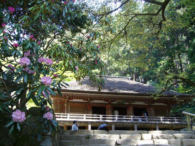 室生寺最大の魅力「金堂」に雅な仏たちが集う
