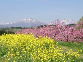 北信州・飯綱町の遅い春を満喫!桃の花の「丹霞郷」と花めぐり|長野県|トラベルjp<たびねす>