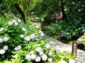 奈良のアジサイ寺「矢田寺」と太子ロマン「斑鳩三塔」を巡る|奈良県|トラベルjp<たびねす>