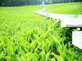 すずらんが咲き誇る!美しき眺望と花の楽園「信州 入笠山」|長野県|トラベルjp<たびねす>