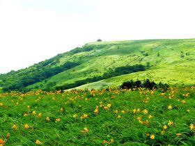 車山でニッコウキスゲ、八島ヶ原湿原で高山植物に出会う信州霧ヶ峰散策|長野県|トラベルjp<たびねす>