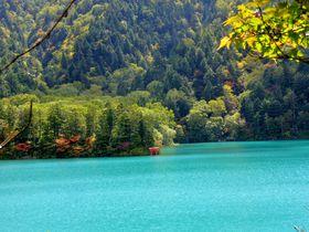 信州・志賀高原で神秘の輝きを見せる大沼池を目指す充実トレッキング|長野県|トラベルjp<たびねす>