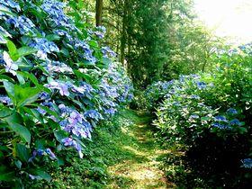 紫陽花が彩る風情ある散歩道!信州上田塩田平「あじさい小道」|長野県|トラベルjp<たびねす>