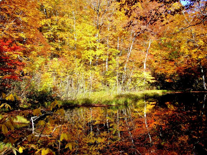 奥裾花自然園は手つかずの自然が残る神秘の森