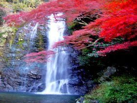 「箕面の滝」に癒される!大阪から電車でお手軽紅葉ハイキング|大阪府|トラベルjp<たびねす>