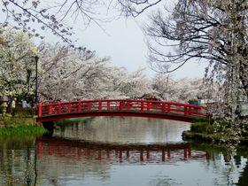 桜を愛した直虎ゆかりの信州須坂で桜ウォーキング