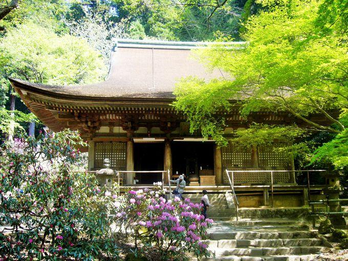 不規則に谷間に点在する室生寺の伽藍に仏が集う