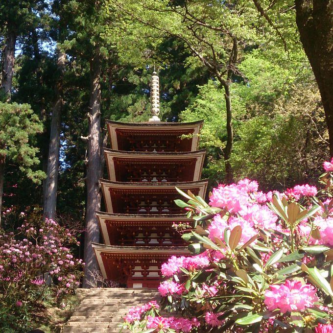 弘法大師一夜造りの伝承のある国宝五重塔