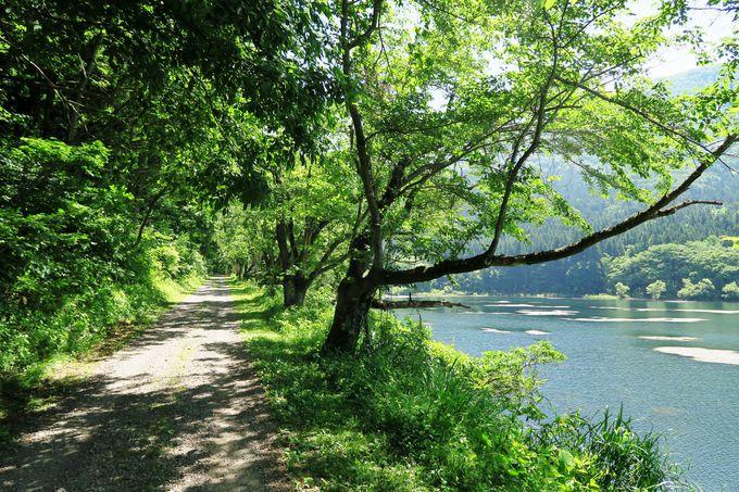 飯山市『神の森』北竜湖周遊の道