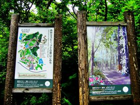 森林セラピーで心身をリフレッシュ!北信州おすすめお手軽5コース|長野県|トラベルjp<たびねす>