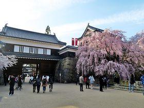 真田ゆかりの地・信州上田城跡公園の古城と桜の競演が絶景!