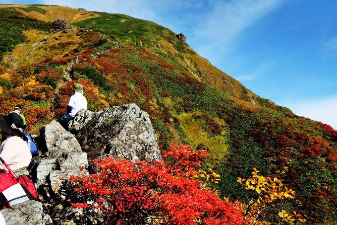 日本百名山・群馬「谷川岳」紅葉とダイナミックな山の風景の対比が楽しい!