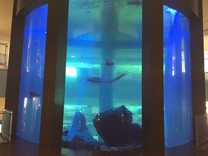 まるで水族館!タワー型水槽「アクアリウム」もチェック