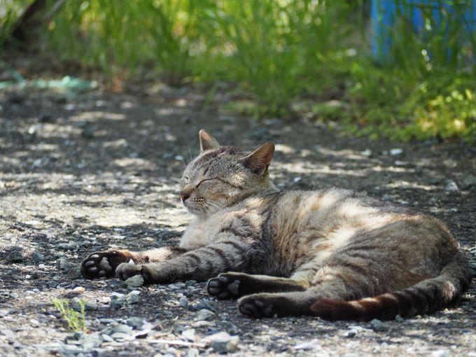 福岡の猫島「相島」を満喫!4つの方法で島を堪能しよう