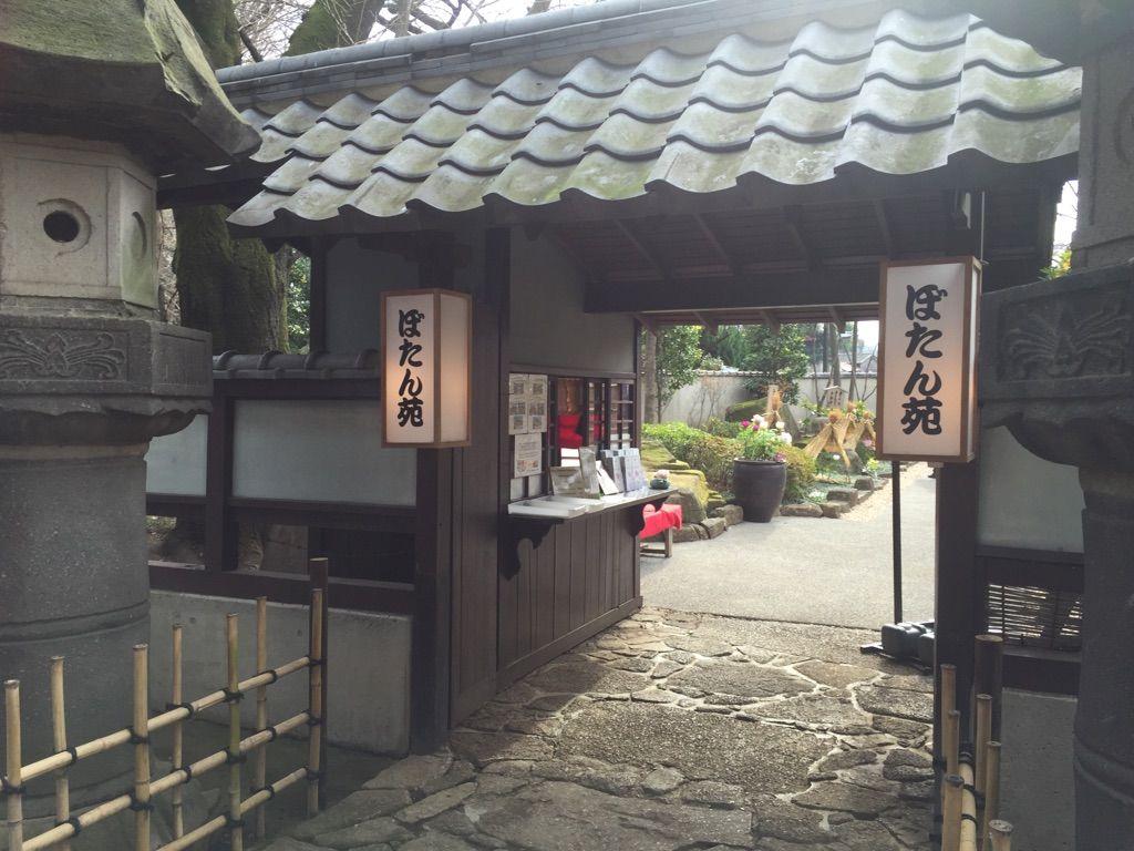 冬に咲くぼたんが美しい!期間限定開苑・上野東照宮「ぼたん苑」