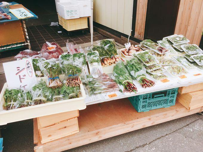 旬の食材が豊富に並ぶ!秋田県で最も歴史ある「五城目朝市」へ