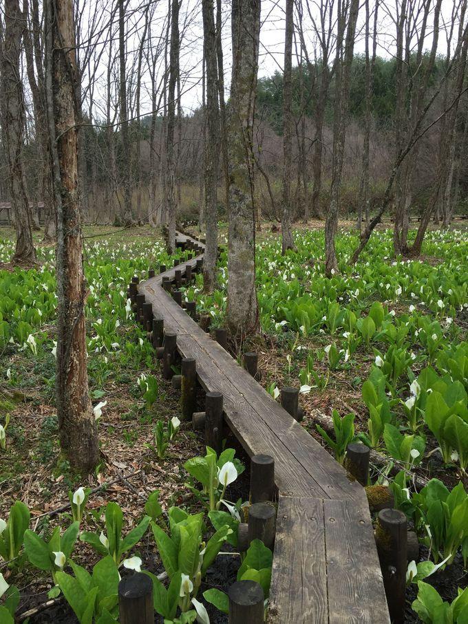 自然のBGMを聞きながら、湿原の中を散策しよう。