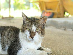 香川の猫島「佐柳島」生活感丸出しの猫たちをパシャリ!|香川県|トラベルjp<たびねす>