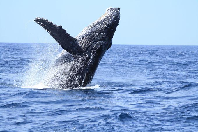 そして…クジラと言えばやはりこれ!