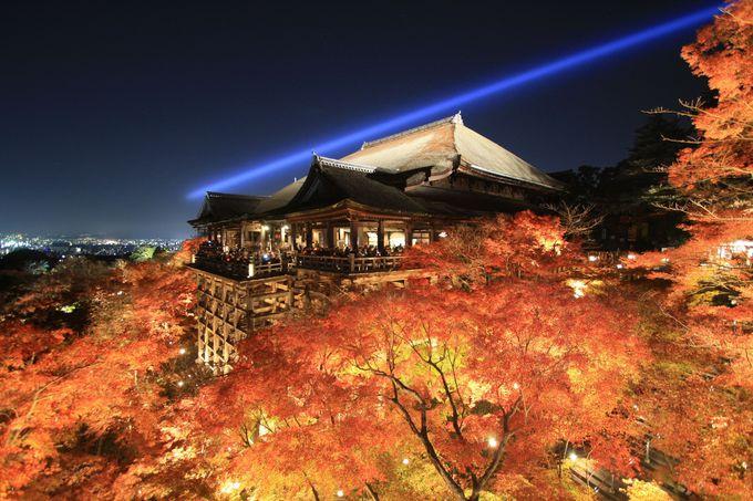 ライトアップで紅葉の海に浮かぶ清水の舞台は絶景!「清水寺」
