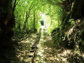 2000歳超えの大樹たちを撮ろう!屋久島「日帰り縄文杉コース」
