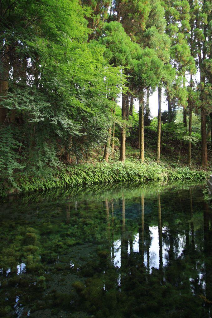 驚くほどの透明度!白川水源の湧水