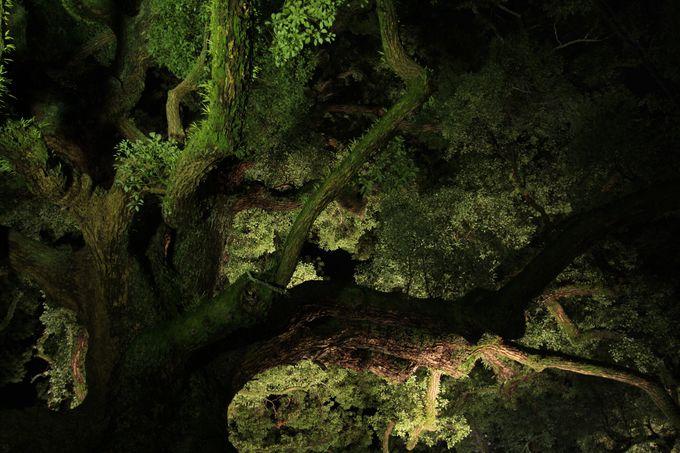 入る前にも木に注目