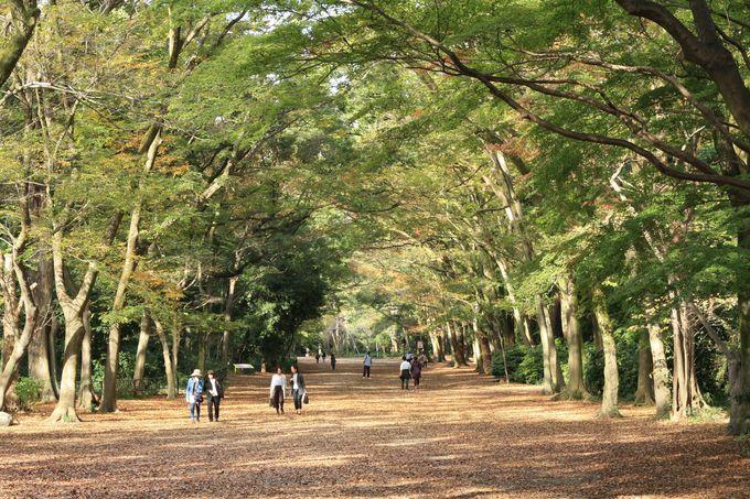 自然いっぱいの糺の森を散策