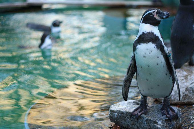 ペンギンは水面の表情と共に