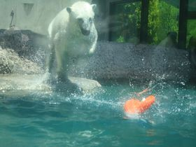 泳ぐ・跳ぶ・走る!「とくしま動物園」で動物たちのかわいい動きを楽しもう|徳島県|トラベルjp<たびねす>