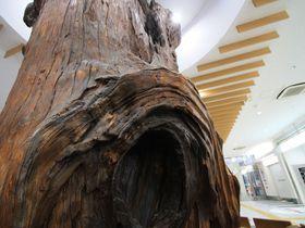 世界唯一!樹齢三千年の屋久杉前で待ち合わせ「鹿児島中央駅」|鹿児島県|トラベルjp<たびねす>