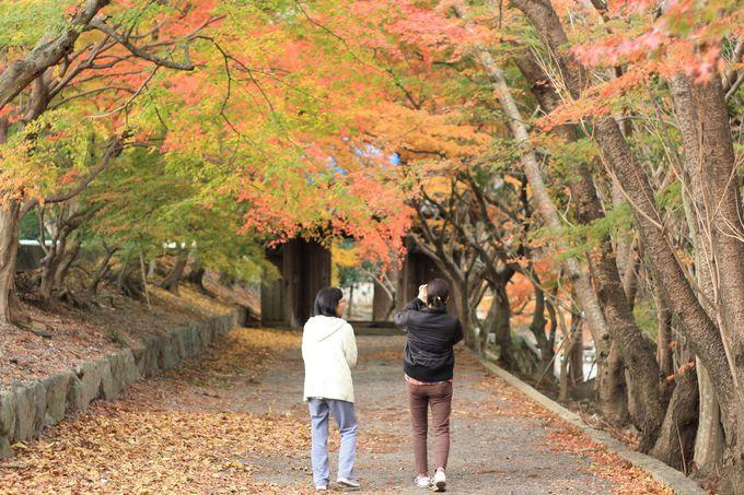 徳島の紅葉は山奥ばかり?