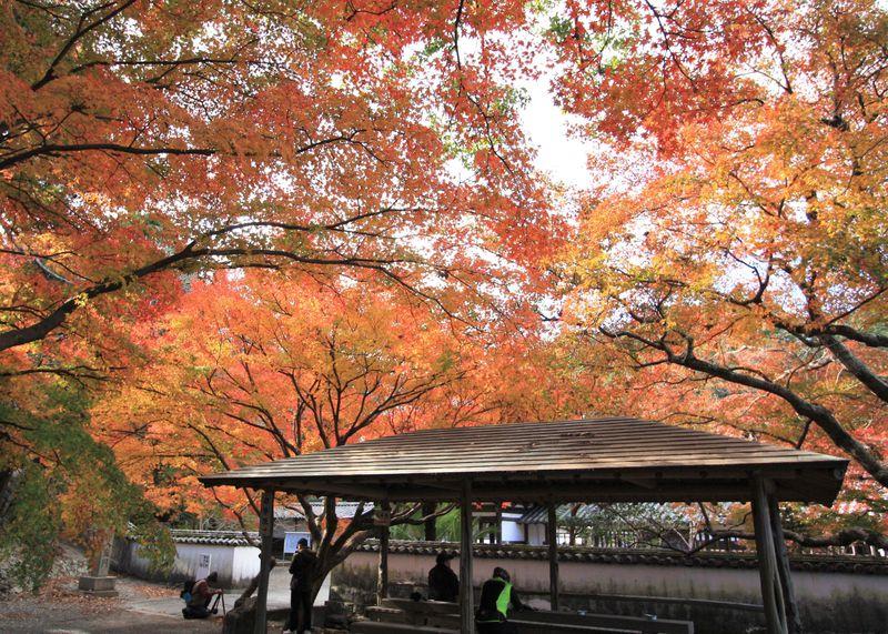 徳島の穴場紅葉名所「阿波の法隆寺」と呼ばれる「丈六寺」で秋を感じよう
