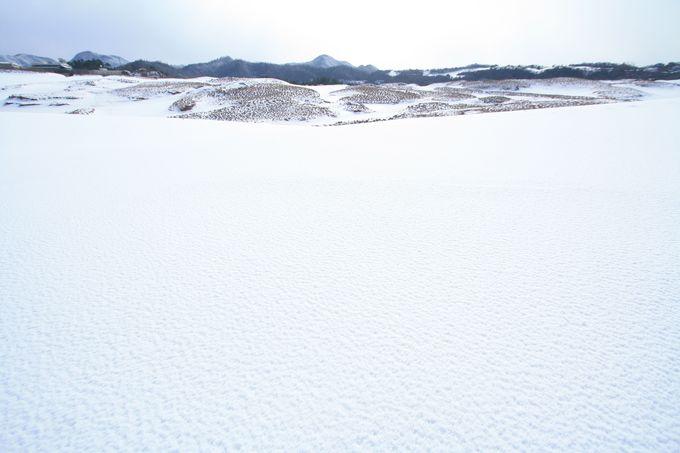 季節によって表情が変わる鳥取砂丘
