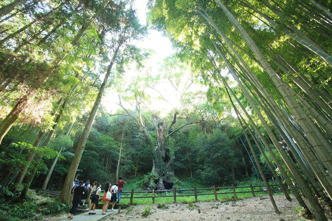 佐賀の知られざるパワースポット、武雄神社