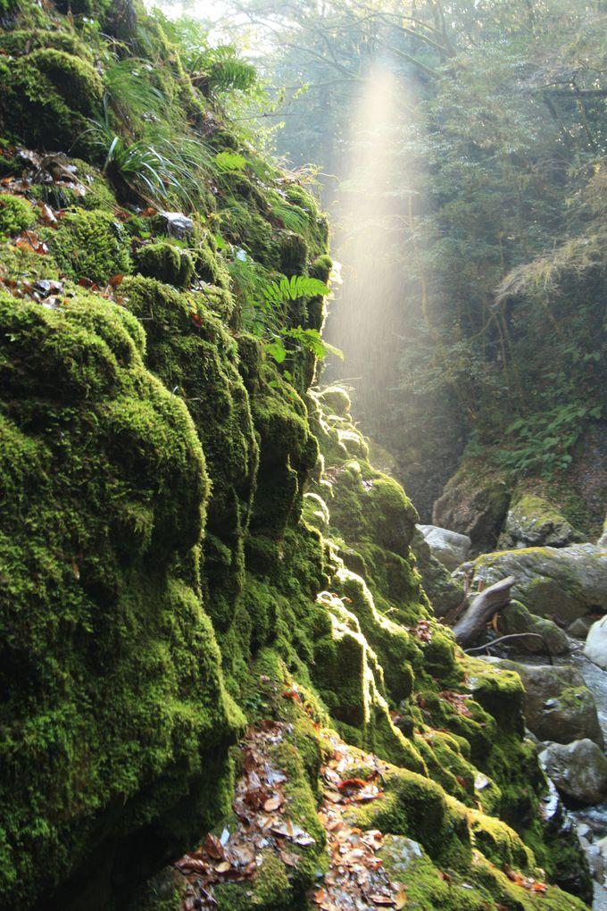 滝だけじゃなく苔むした岩にも注目