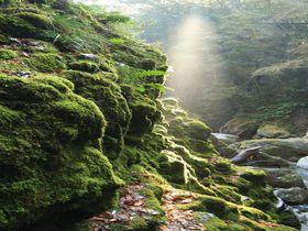 あなたは苔派?それとも滝派?徳島「轟の滝」は神秘を感じる秘境の地|徳島県|トラベルjp<たびねす>