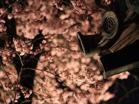 徳島「原田家住宅」の蜂須賀桜で一足早い春を感じよう