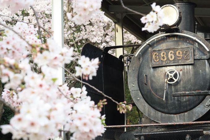 徳島中央公園の桜はここがイイ!