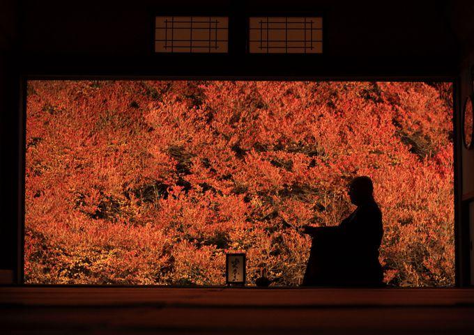 秋の絶景ここにあり!兵庫「安国寺」の紅葉ライトアップが美しすぎる