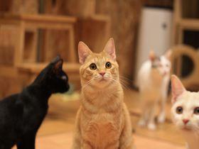 本当に猫が好きな人にだけ教えたい。博多の「ねこ蔵ホステル」とは