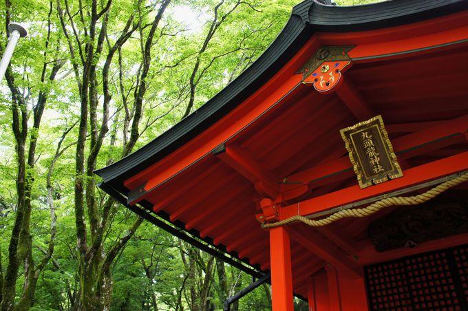 龍神様のお住まい、静かな森の中に佇む幻想的な本殿!
