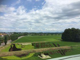 福島県鏡石町 復興のシンボル「田んぼアート」を見に行こう|福島県|トラベルjp<たびねす>