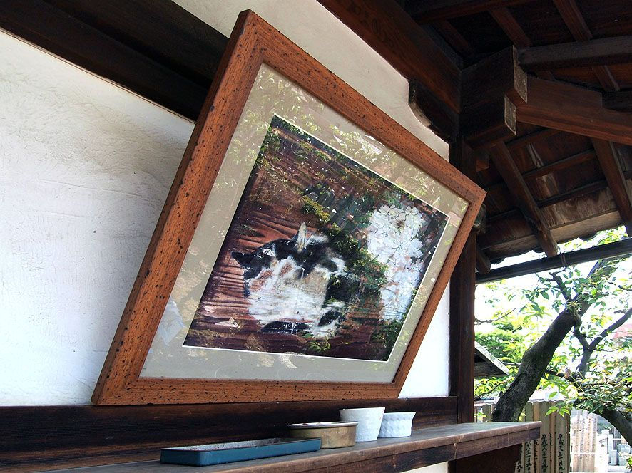 三味線の音につられて毎晩踊りあかしていた「光清寺」の浮かれ猫